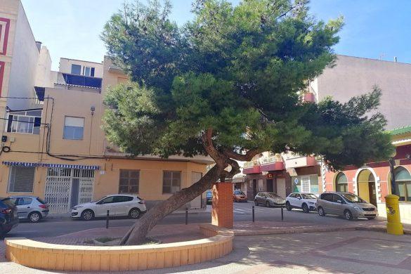 Los 5 árboles más singulares de España del 2021