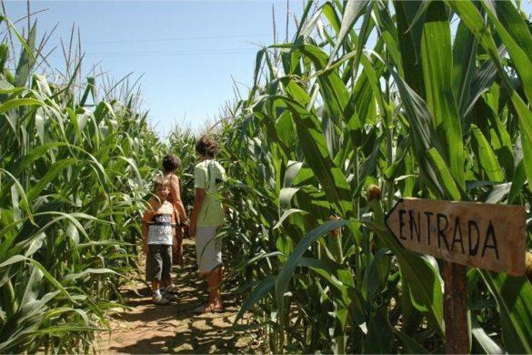 El laberinto de maíz