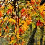 Turismo rural de otoño en el Valle del Jerte