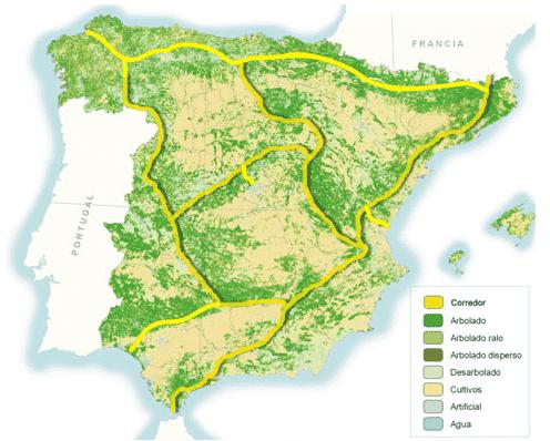 Mapa ardilla