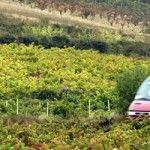 El Vinobús de La Rioja