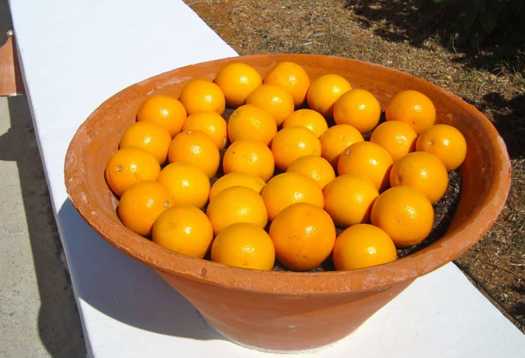 Naranjas ibicencas