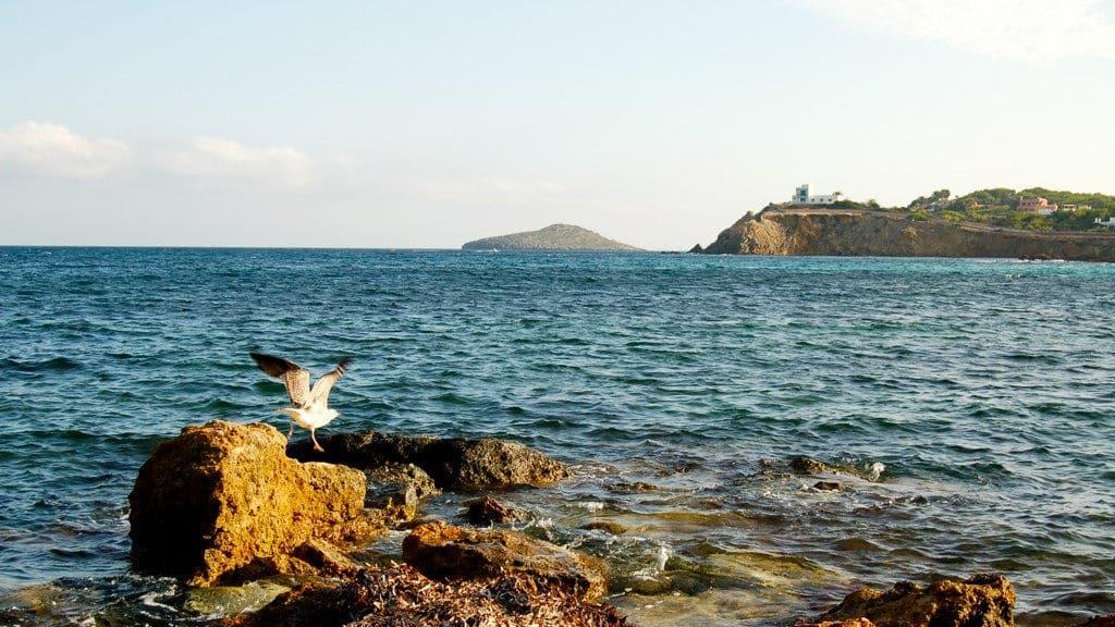 Una gaviota alzando el vuelo. ¿Adónde irá?