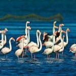 Flamencos en Terres de l'Ebre
