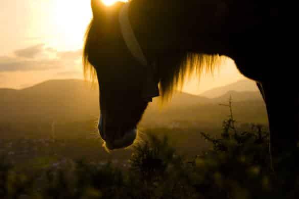 Pagoeta, el Parque Natural de los caballos salvajes