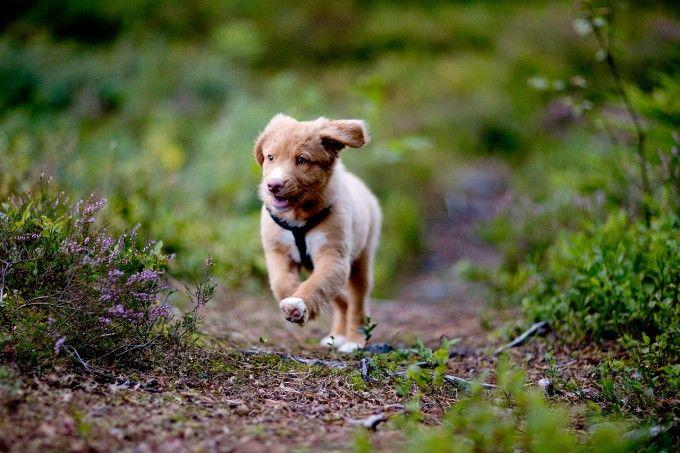 mascotas y naturaleza