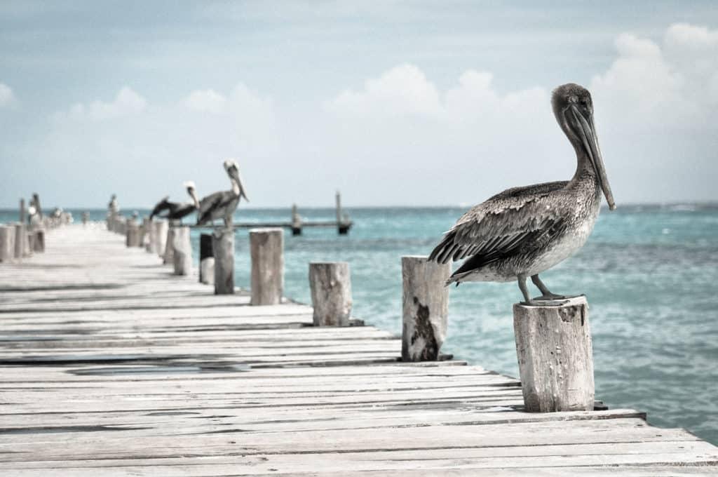 Destinos naturales: Turismo Ornitológico