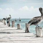 Turismo ornitológico en España