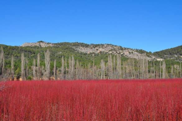 Los valles del color rojo: la Ruta del Mimbre