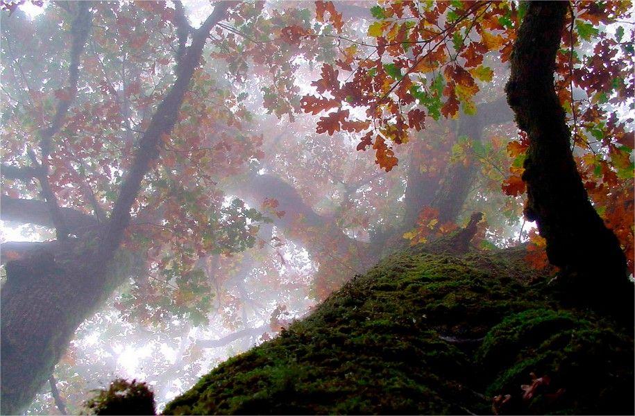 Bosque de Muniellos