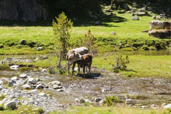 Los Parques Nacionales de España (I)