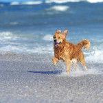 10 playas en España para ir con perros (y algunas con servicios para ellos)