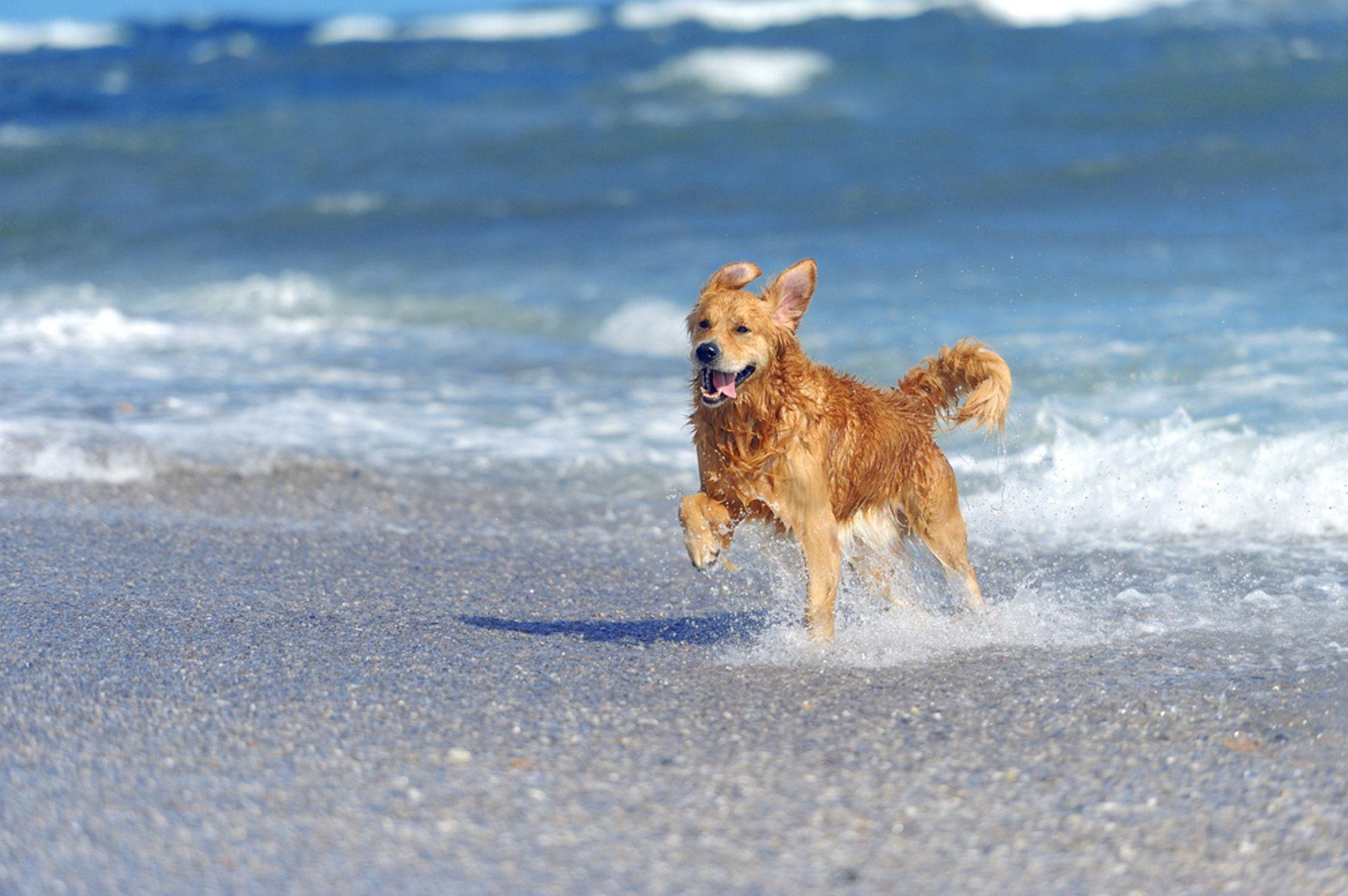 Playas para perros en México