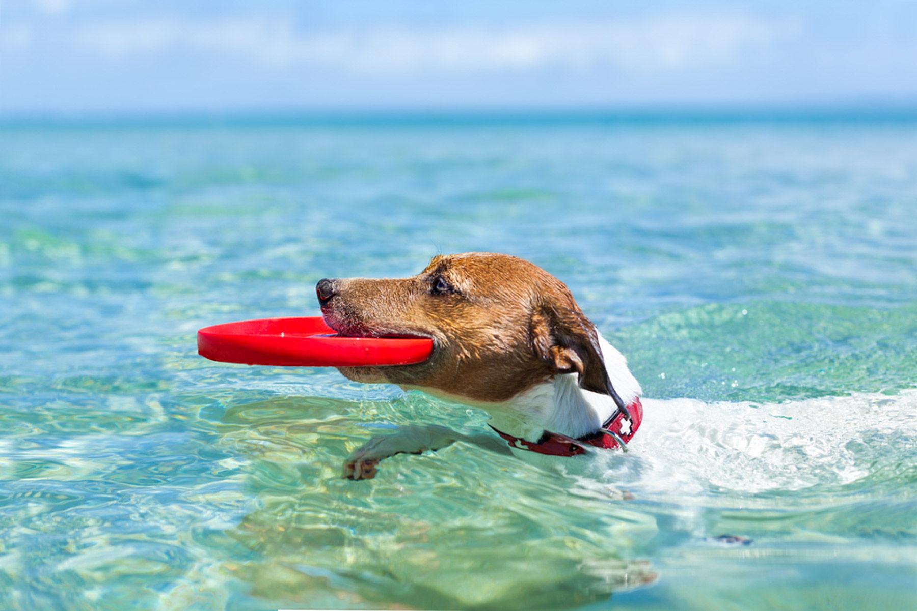 Playa para perros en México