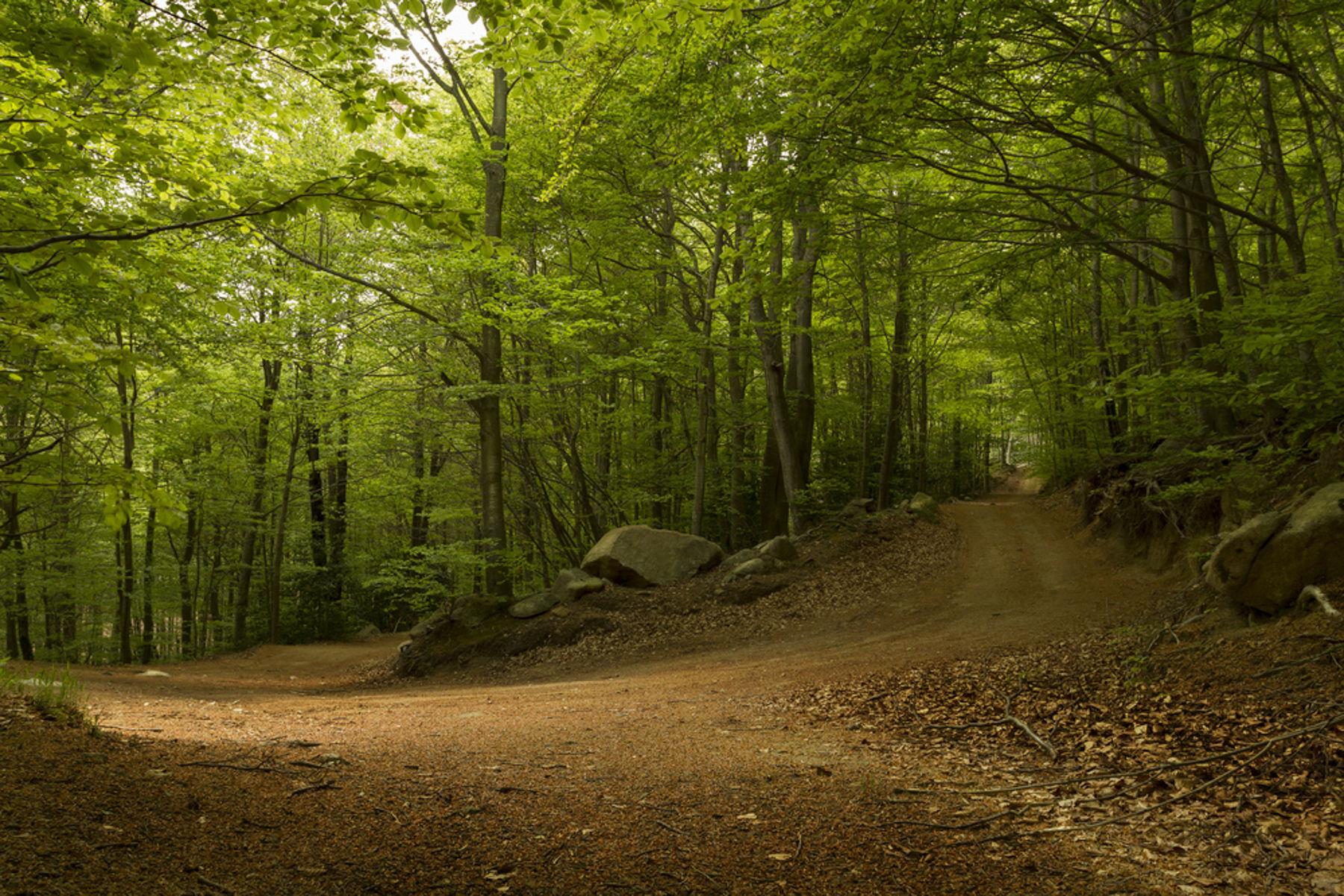 reservas naturales cerca de Barcelona Montseny