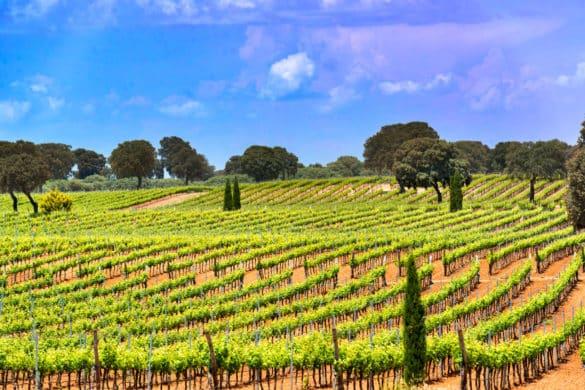Enoturismo en Castilla-La Mancha, el mayor viñedo del mundo