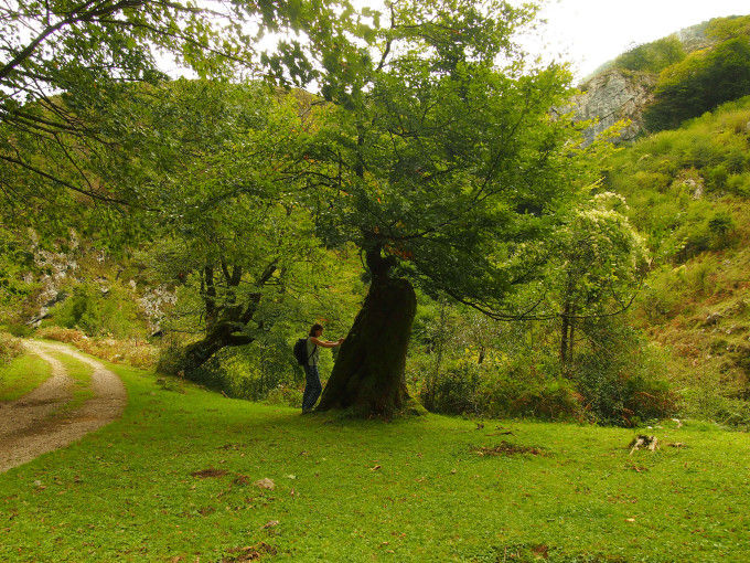 Concejo de Amieva, Asturias. Fuente: ##http://www.flickr.com/photos/franciscojgonzalez/8081735305/##Francisco González##