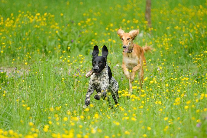 Perros en una casa rural