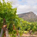 El Monte Arabí rodeado de viñedos.