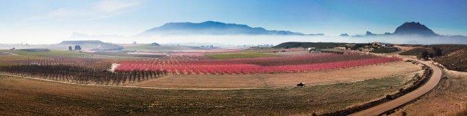 Floración Cieza. Fuente: Sergio Gonzalez. Murcia Turística