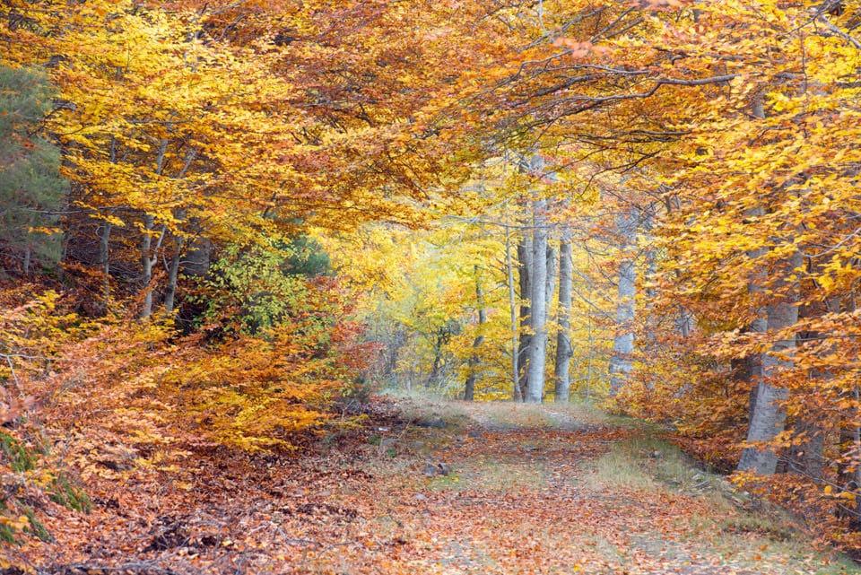 Moncayo, otoño