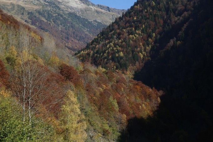 Árboles  coloridos en el Valle de Varradòs. Fuente: Jordi Canal-Soler