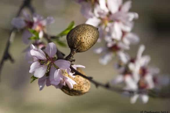 9 lugares para amar la floración de primavera