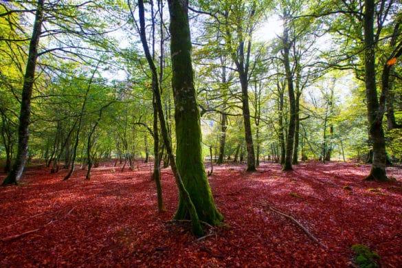 La Selva de Irati, paseando por un cuento de hadas