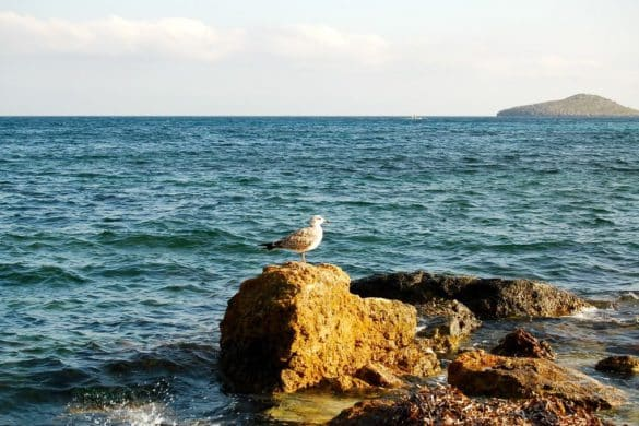 4 parques naturales en Baleares para ver aves