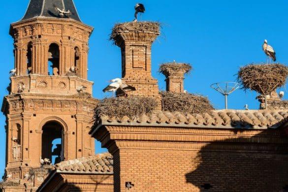 Turismo ornitológico en la Reserva Natural Sotos del Ebro