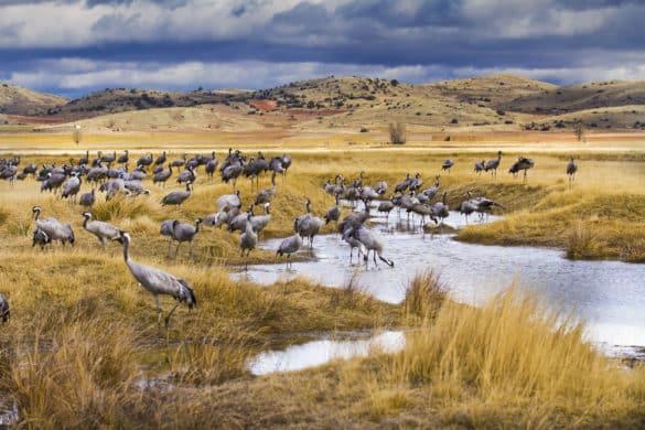5 lugares para ver aves en España