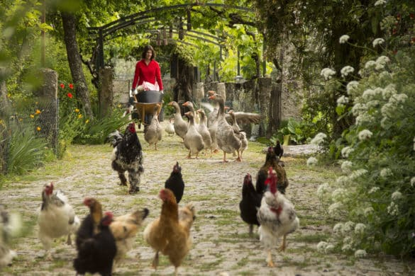 Casas rurales con granjas en Portugal para toda la familia