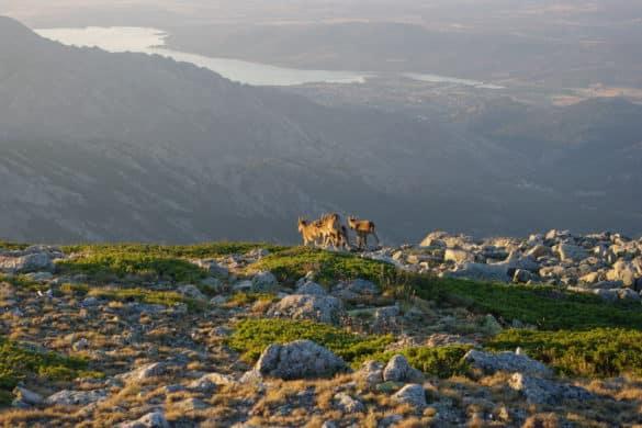 Los 10 mejores rincones de la Sierra Norte de Madrid