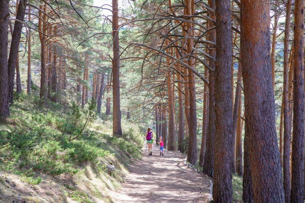 Bosque de Canencia