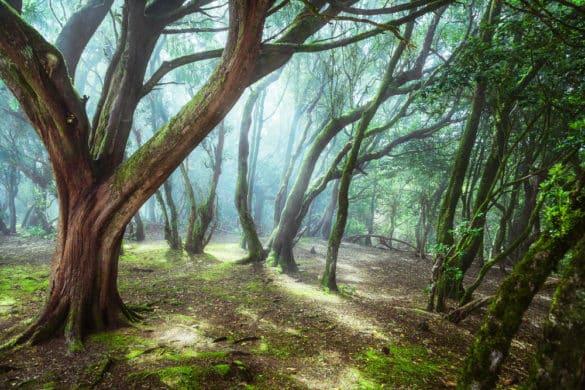 Las montañas mágicas de Anaga