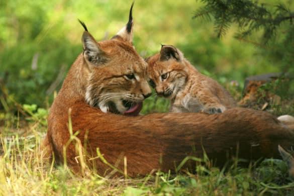 Test: ¿Cuánto sabes de la fauna de España?