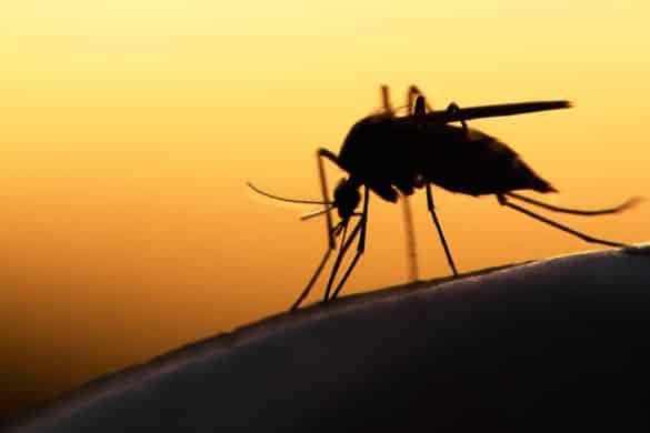 Verdades y mitos sobre a quiénes prefieren picar los mosquitos