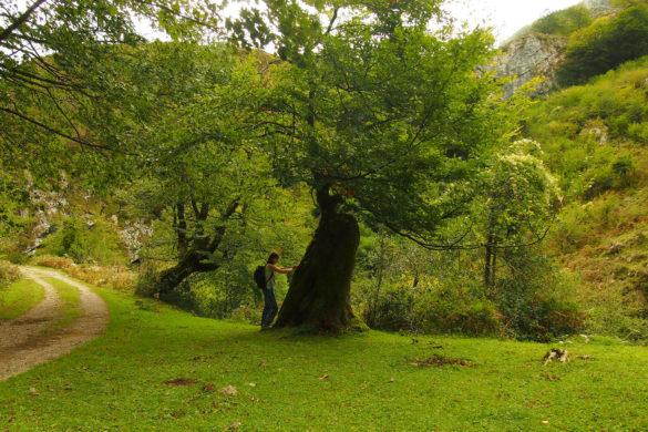 Beyu Pen, la ruta mitológica en Asturias para recorrer con niños