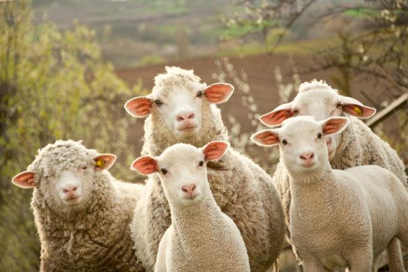 9 experiencias de propietarios con alojamientos con huerto y granja