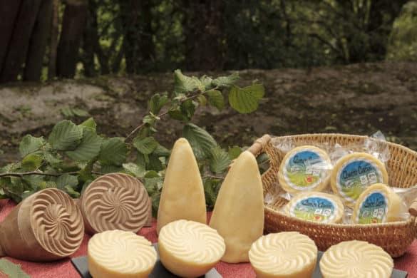 El Casín, el queso más antiguo de Europa