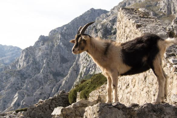 La fauna salvaje sale a explorar las calles españolas