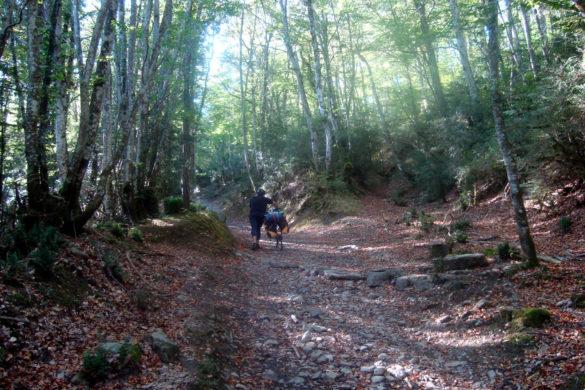 (Humor) 7 consejos para NO terminar el Camino de Santiago en bici