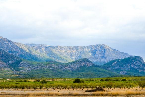 Armas de reforestación masiva: replantar Murcia a cañonazos