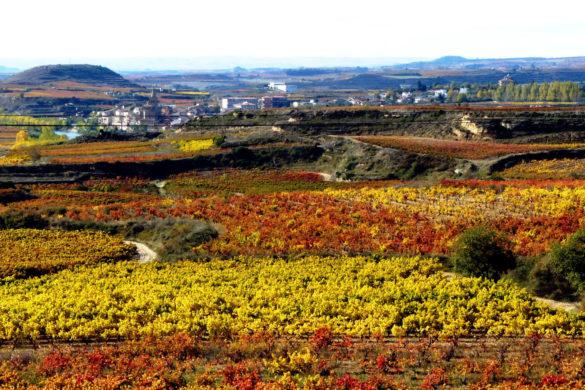 «Rutas del vino, bodegas para conocer y recomendar»