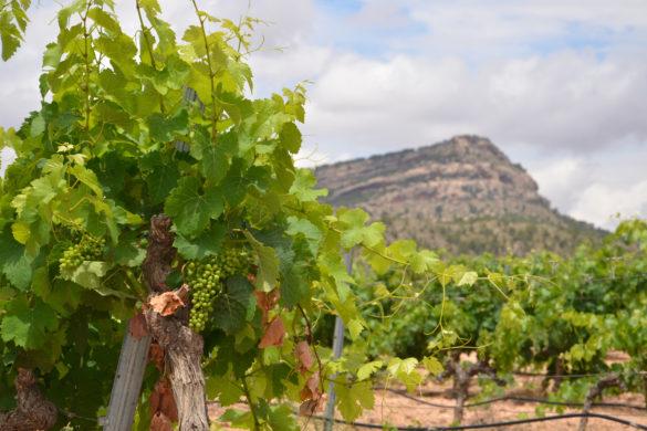 Rutas del vino en la Región de Murcia: Bullas, Yecla y Jumilla
