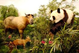 Museo de Fauna Salvaje, el más importante de Europa