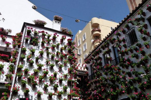 65 patios abren al público en Córdoba