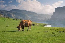 Lagos de Covadonga, los diamantes de los Picos de Europa