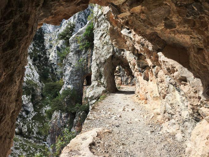 Rutas de senderismo para hacer con perro en Asturias