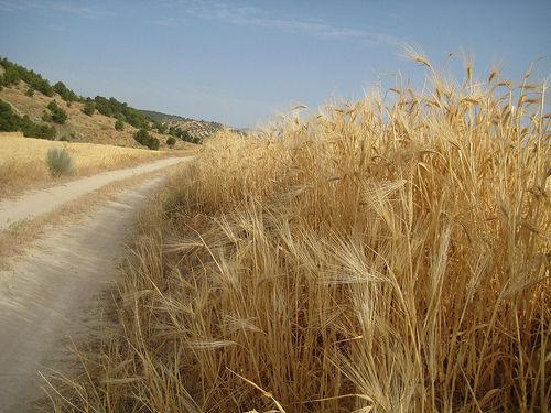 TransAndalus, la Ruta para recorrer Andalucía en bici